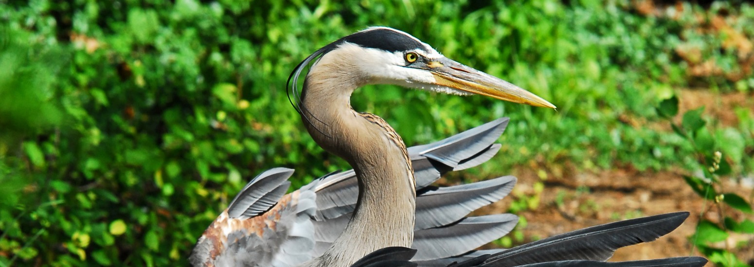 Photo credit: Steven J. Dundas, http://www.sjdphoto.com/