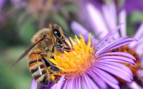 WT_beekeepers