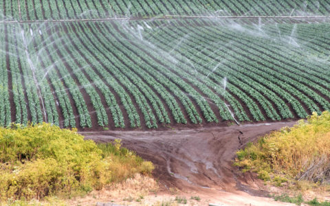 Water access key to long-term U.S. agricultural productivity