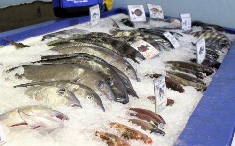New collaborative research to examine economic impacts of NC commercial fisheries
