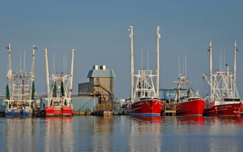 image of shrimp and fishing boats